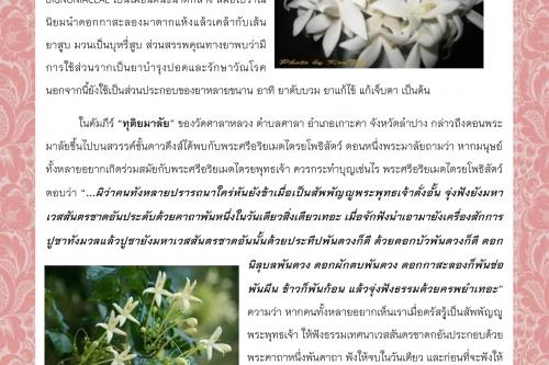 กาสะลอง : หนึ่งในดอกไม้บูชามหาชาติชาดก - 9 พฤศจิกายน 2563